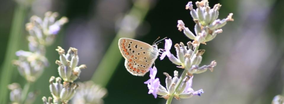 Die Raupe Und Der Schmetterling Sauerwald Kunstde