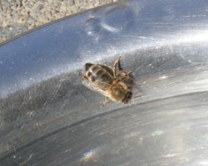 Biene 1 Bild 03