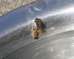 Biene 1 Bild 05
