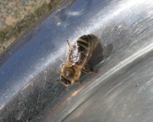Biene 1 Bild 06