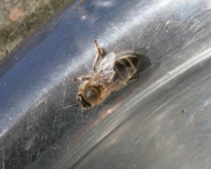 Biene 1 Bild 07