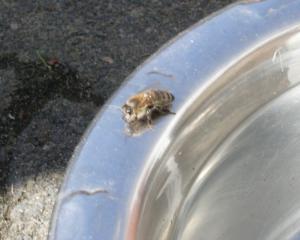 Biene 1 Bild 09