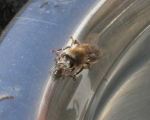 Biene 2 Bild 03