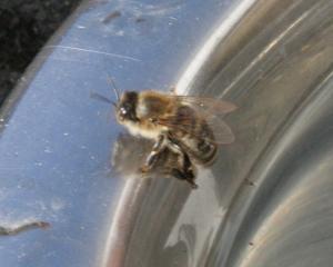 Biene 2 Bild 05
