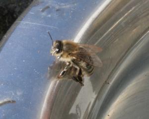 Biene 2 Bild 06