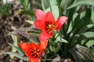 Garten April bis Juni 2018 Bild 003