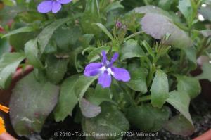 Garten April bis Juni 2018 Bild 018