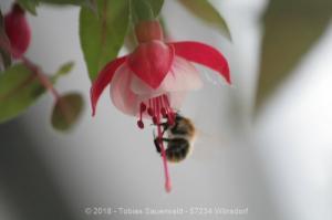 Garten April bis Juni 2018 Bild 031