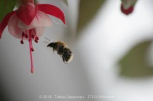 Garten April bis Juni 2018 Bild 032