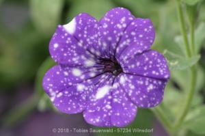 Garten April bis Juni 2018 Bild 038