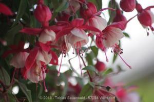 Garten April bis Juni 2018 Bild 051