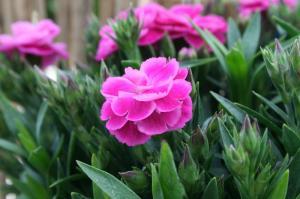 Blume-Pflanzen 2017 Bild 03