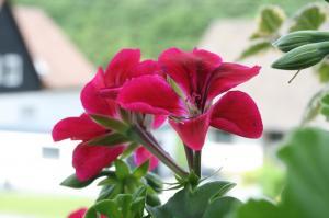Blume-Pflanzen 2017 Bild 04