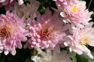 Blume-Pflanzen 2017 Bild 05