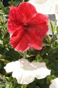 Blume-Pflanzen 2017 Bild 13
