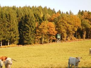 Gernsdorf - Oktober 2017 Bild 11